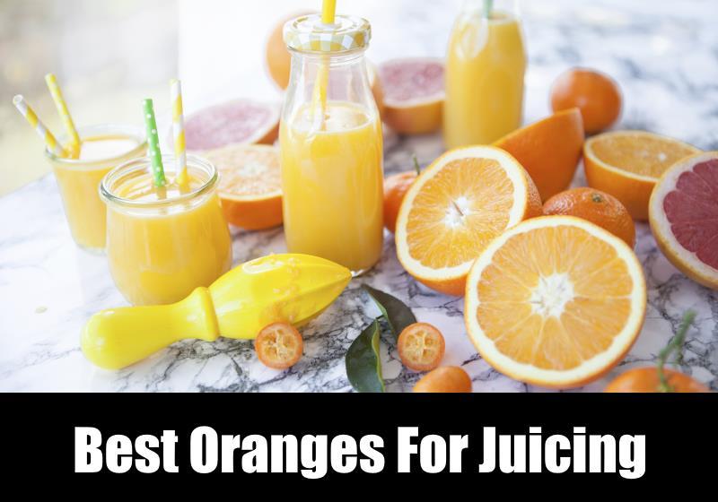 Raw food diet juicer or blender