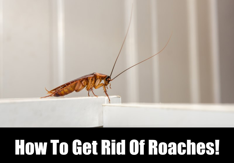 How To Get Rid Of Cockroaches In Bathroom 28 Images Effective Home Remedies For Roaches